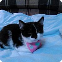 Adopt A Pet :: Buttercup - Lancaster, CA