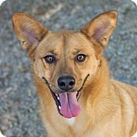Adopt A Pet :: JD - Salt Lake City, UT