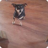 Adopt A Pet :: Jules - Phoenix, AZ