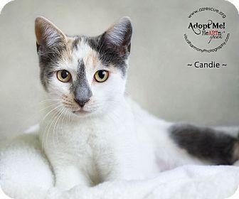 Domestic Shorthair Cat for adoption in Phoenix, Arizona - Candie