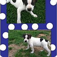 Adopt A Pet :: Luke - Toledo, OH