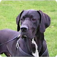 Adopt A Pet :: Jack - Rigaud, QC
