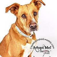 Adopt A Pet :: Nutmeg - Best Dog Ever! - Denver, CO