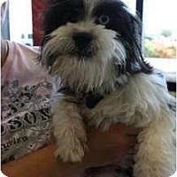 Adopt A Pet :: Prince - Arlington, TX