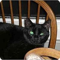 Adopt A Pet :: Screech - Lombard, IL