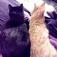 Adopt A Pet :: Midnight & Rusty - Brooklyn, NY