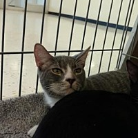 Adopt A Pet :: Lorenzo - Land O Lakes, FL