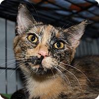 Adopt A Pet :: Truffles - New Richmond,, WI
