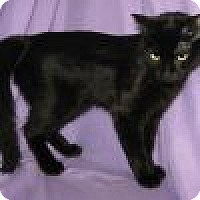 Adopt A Pet :: Delaney - Powell, OH
