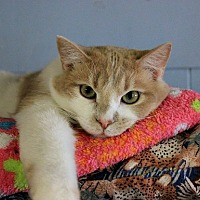 Adopt A Pet :: Tony - New Richmond,, WI