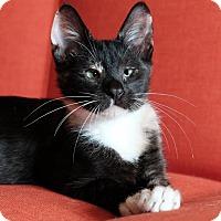 Adopt A Pet :: Harper - Brooklyn, NY