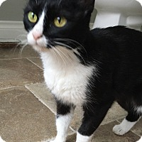 Adopt A Pet :: Joelle - Houston, TX