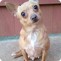 Adopt A Pet :: Bonnie - Lawrenceville, GA
