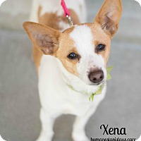 Adopt A Pet :: XENA - Modesto, CA