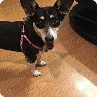 Adopt A Pet :: Jude AKA Duchess PENDING ADOPT - Columbia, TN