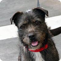 Terrier (Unknown Type, Medium) Mix Dog for adoption in Palmdale, California - Beatrice