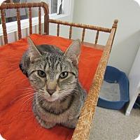 Adopt A Pet :: Linzy - Medina, OH