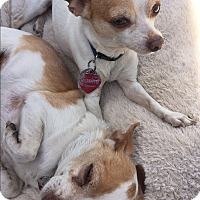 Adopt A Pet :: Radar & Chico - Van Nuys, CA