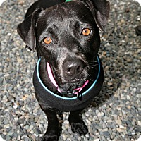 Adopt A Pet :: Lucy - Bellingham, WA