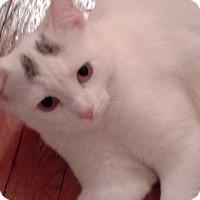 Adopt A Pet :: Angela - New  York City, NY