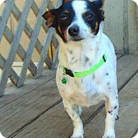 Adopt A Pet :: Freckles - Seattle, WA