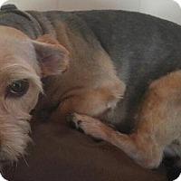 Adopt A Pet :: Athena - Orlando, FL