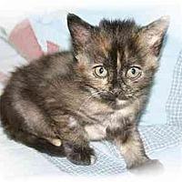 Adopt A Pet :: Ava - Montgomery, IL