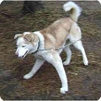 Adopt A Pet :: Redman--HW Pos! - Belleville, MI