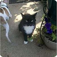 Adopt A Pet :: misty - Murfreesboro, TN