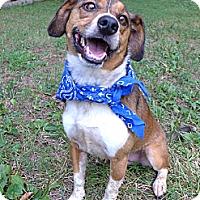 Adopt A Pet :: Ranger - Mocksville, NC