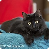 Adopt A Pet :: Bora - Fountain Hills, AZ