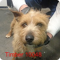 Adopt A Pet :: Timber - baltimore, MD