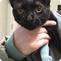 Adopt A Pet :: Honeycrisp - Westminster, CA