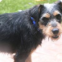 Adopt A Pet :: Chester - Norwalk, CT
