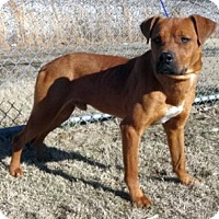 Adopt A Pet :: Hutch - Olive Branch, MS