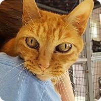 Adopt A Pet :: Cassiopeia - Salisbury, MA