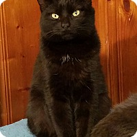 Adopt A Pet :: Onyx - Jeannette, PA