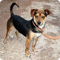 Adopt A Pet :: Will - Brattleboro, VT