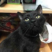 Adopt A Pet :: CRICKET - Canfield, OH