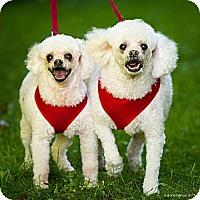 Adopt A Pet :: Cracker Jack - Essex Junction, VT