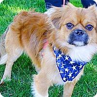 Adopt A Pet :: Peanut cutest boy - Sacramento, CA