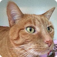 Adopt A Pet :: MOCHA aka MOKA - Hamilton, NJ