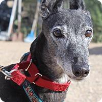 Adopt A Pet :: Maggie - Tucson, AZ