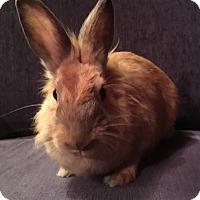 Adopt A Pet :: Sarabi - Miami, FL