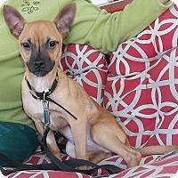 Adopt A Pet :: Snoop - Memphis, TN