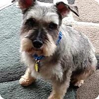 Adopt A Pet :: Bernard - Chester Springs, PA