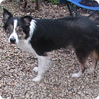 Adopt A Pet :: Sadie Mae - House Springs, MO