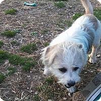 Adopt A Pet :: Jug # 1079 - Nixa, MO