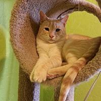 Adopt A Pet :: Dash - Tucson, AZ