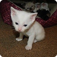 Adopt A Pet :: Andy - Austintown, OH